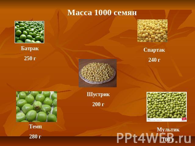 масса 1000 семян сои