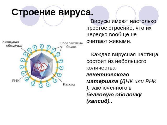 Доклад вирус по биологии 7881