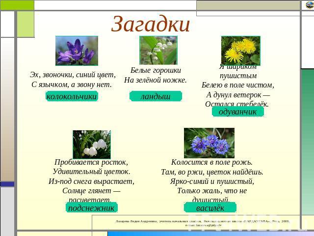 загадки про цветы с картинками снимках завод