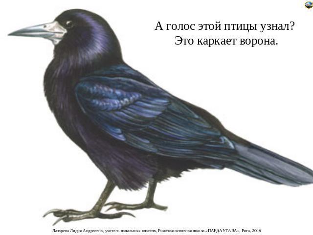 ворона картинки для детей