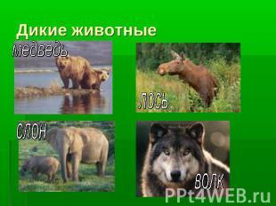 Дикие и домашние животные класс презентация к уроку Окружающий мир слайда 4 Дикие животные