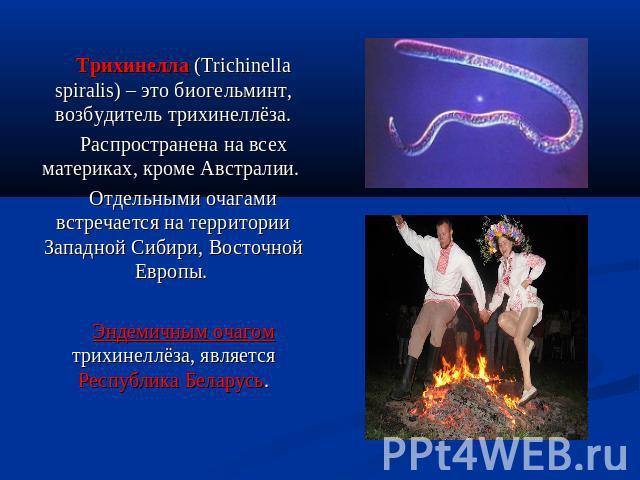 """Презентация на тему """"Трихинеллёз"""" - скачать презентации по Медицине"""