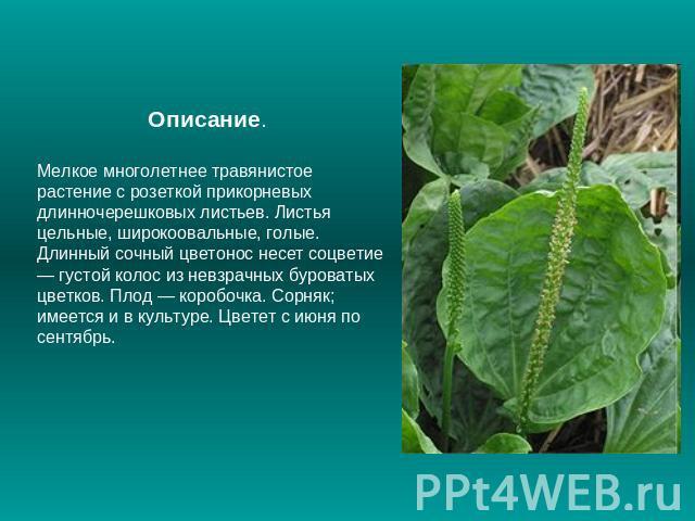 Лекарственные растения название и фото, состав, калорийность. Список лекарственных растений по алфавиту.