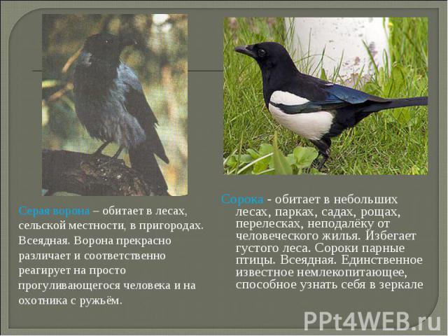 hindi essay for crow कौवा एक पक्षी है। राजस्थानी में इसे कागला तथा मारवाडी भाषा में हाडा कहा जाता हैँ |राजस्थान में एक बहुप्रचलित कहावत है- मलके माय हाडा.