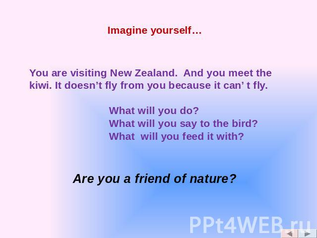 You are visiting New Zealand. And you meet the kiwi. It doesn't fly from you because it can' t fly. What will you do? What will you say to the bird? What will you feed it with?