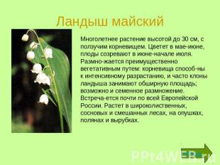 Растения И Красной Книги России Фото И Описание растения и красной книги россии фото и описание