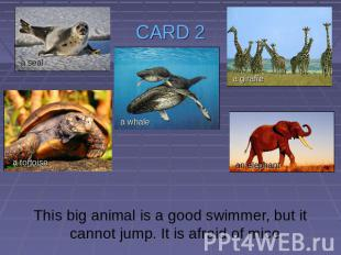 CARD 2 This big animal is a good swimmer, but it cannot jump. It is afraid of mi
