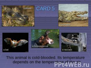 CARD 5 This animal is cold-blooded. Its temperature depends on the temperature o