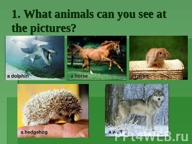 1. What animals can you see at the pictures?