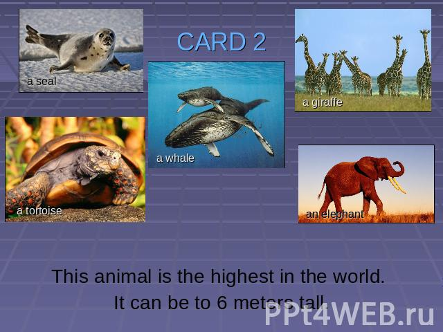 CARD 2 This animal is the highest in the world. It can be to 6 meters tall.