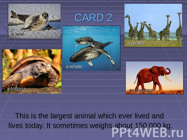 CARD 2 This is the largest animal which ever lived and lives today. It sometimes weighs about 150 000 kg.