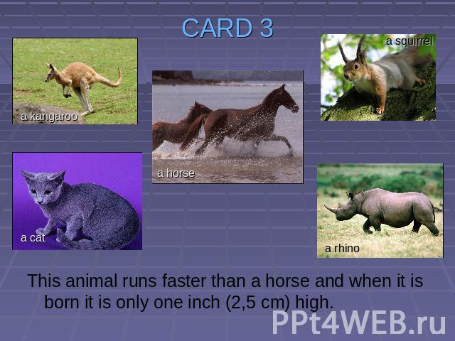 CARD 3 This animal runs faster than a horse and when it is born it is only one inch (2,5 cm) high.