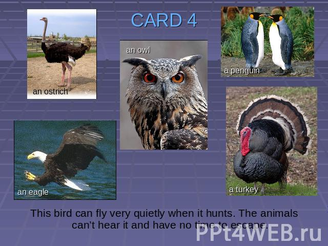 CARD 4 This bird can fly very quietly when it hunts. The animals can't hear it and have no time to escape.