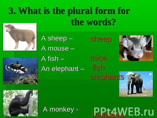 3. What is the plural form for the words? A sheep – A mouse – A fish – An elephant – A monkey -