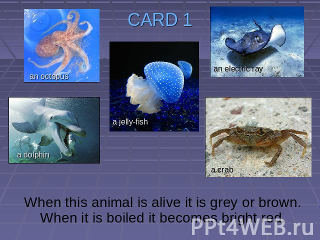 CARD 1 When this animal is alive it is grey or brown. When it is boiled it becomes bright red.