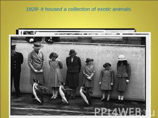 1828- it housed a collection of exotic animals.