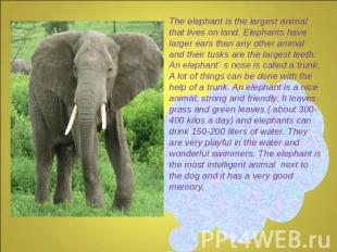 The elephant is the largest animal that lives on land. Elephants have larger ear