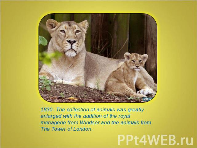 1830- The collection of animals was greatly enlarged with the addition of the royal menagerie from Windsor and the animals from The Tower of London.