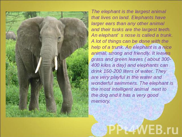 The elephant is the largest animal that lives on land. Elephants have larger ears than any other animal and their tusks are the largest teeth. An elephant` s nose is called a trunk. A lot of things can be done with the help of a trunk. An elephant i…