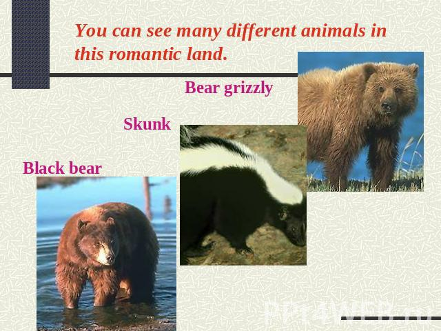 You can see many different animals in this romantic land.