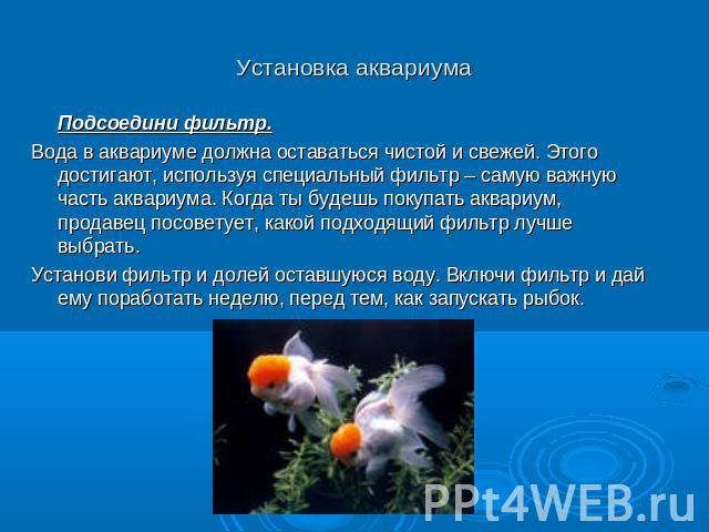 Биология практическая работа 2 аквариум как девушка модель экосистемы леонид максимов