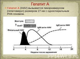 Гепатит А Гепатит A (HAV) вызывается пикорнавирусом (гепатовирус) размером 27 нм