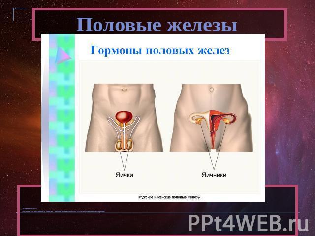 Женские половые гормоны во время климакса