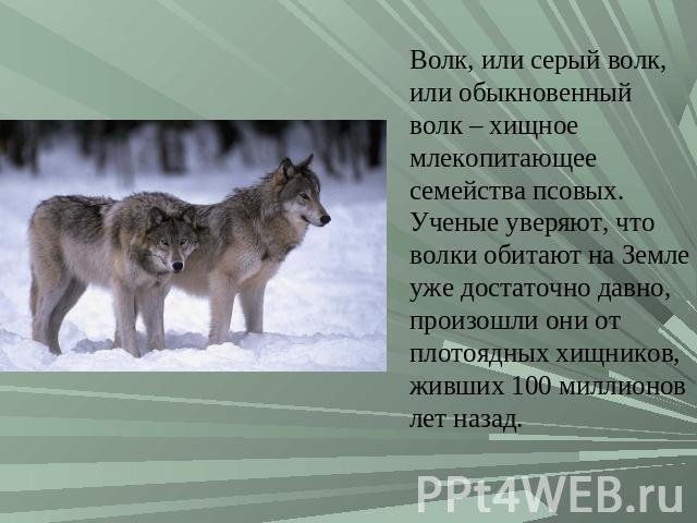 Реферат на тему волк 8114