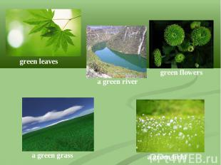 green leavesa green rivergreen flowersa green grassa green field