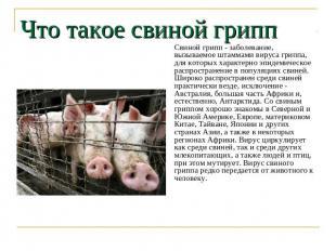 Что такое свиной грипп Свиной грипп - заболевание, вызываемое штаммами вируса гр