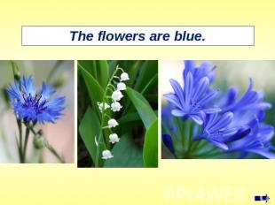 The flowers are blue.