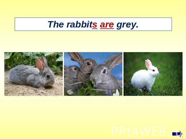 The rabbits are grey.