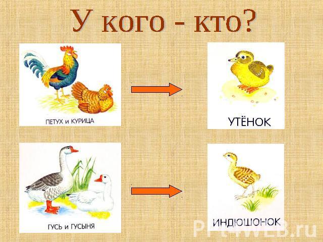 картинки домашние птицы и их детеныши для детей