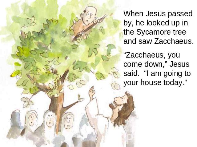 "When Jesus passed by, he looked up in the Sycamore tree and saw Zacchaeus. ""Zacchaeus, you come down,"" Jesus said. ""I am going to your house today."""