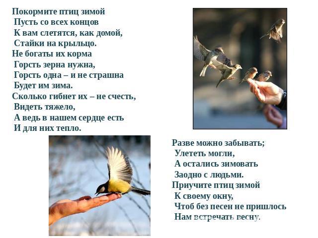 Скачать шаблон презентации птицы зимой