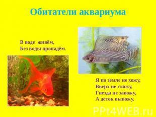 Доклад о рыбках аквариумных 8717