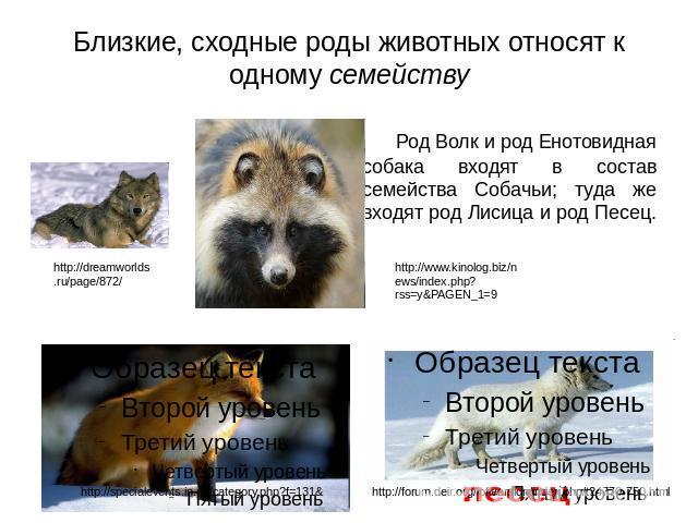 К какой группе относится волк
