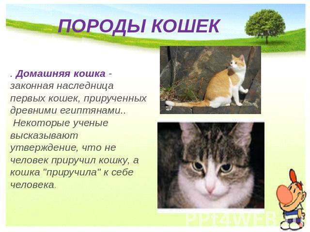 Презентация про котов