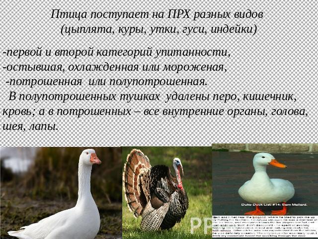 описание гдз и утки гуся класс сравнительное 4