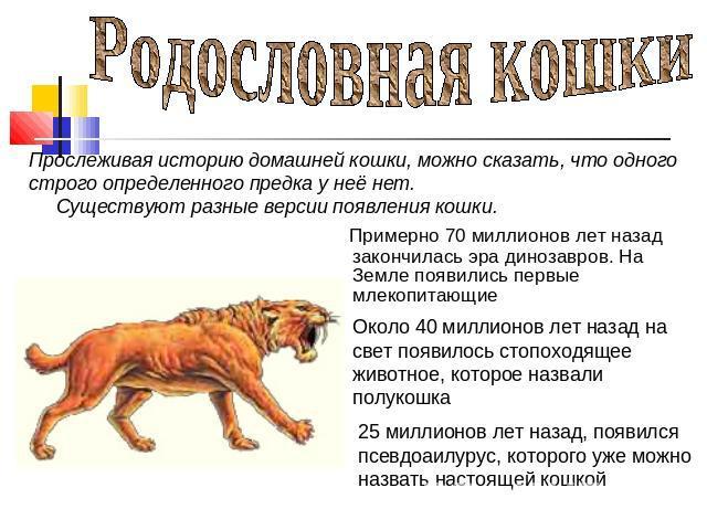 Картинки по запросу предки кошачьих