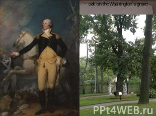 oak on the Washington`s grave