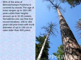 86% of the area of Belovezhskaya Pushcha is covered by woods.The age of trees ra
