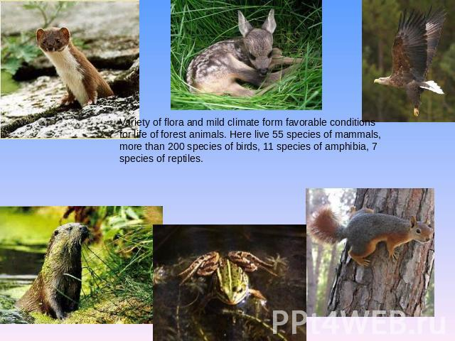 Variety of flora and mild climate form favorable conditions for life of forest animals. Here live 55 species of mammals, more than 200 species of birds, 11 species of amphibia, 7 species of reptiles.