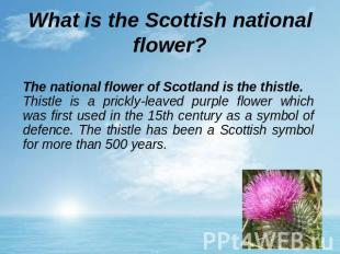 What is the Scottish national flower? The national flower of Scotland is the thi