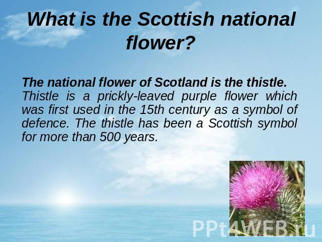 What is the Scottish national flower? The national flower of Scotland is the thistle.Thistle is a prickly-leaved purple flower which was first used in the 15th century as a symbol of defence. The thistle has been a Scottish symbol for more than 500 years.