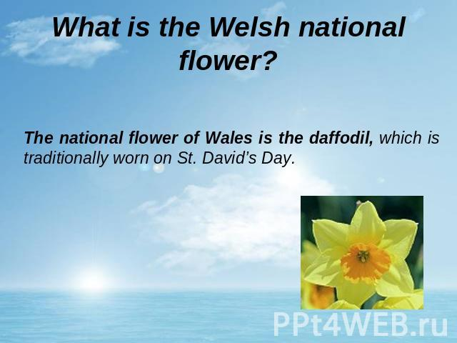 What is the Welsh national flower? The national flower of Wales is the daffodil, which is traditionally worn on St. David's Day.