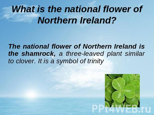 What is the national flower of Northern Ireland? The national flower of Northern Ireland is the shamrock, a three-leaved plant similar to clover. It is a symbol of trinity