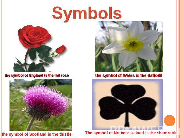 Symbols the symbol of England is the red rose the symbol of Wales is the daffodil the symbol of Scotland is the thistle The symbol of Nothern Ireland is the shamrock