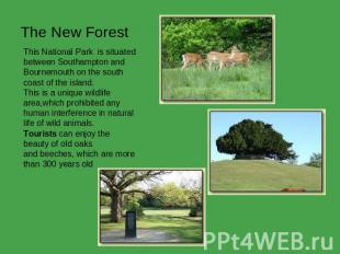 The New Forest This National Park  is situated between Southampton and Bournemou