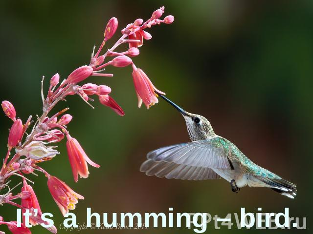 It's a humming – bird.
